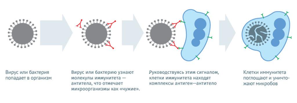Как действуют вакцины фото